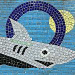 3_Shark