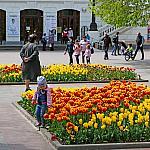 Child in tulips