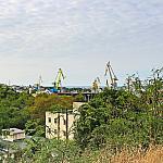 Gledicia and cranes