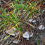 Grass and mushrooms