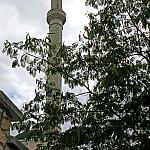 Minaret and Albizia