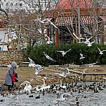 People and birds_1