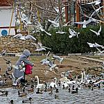 People and birds_2