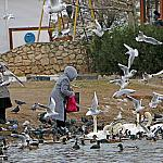 People and birds_3