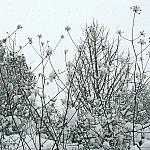 Pieces of snow
