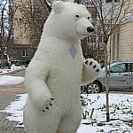 Polar bear_11