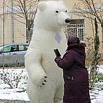 Polar bear_2