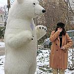 Polar bear_3