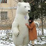 Polar bear_4