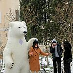 Polar bear_6