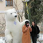 Polar bear_8