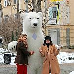 Polar bear_9