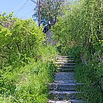 Stairs and celandine