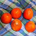 Still lifes with persimmon_1