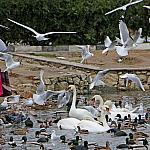 Woman feeding birds_1