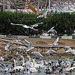Woman feeding birds_3