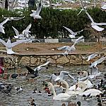 Woman feeding birds_4