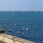Yachts and seagulls